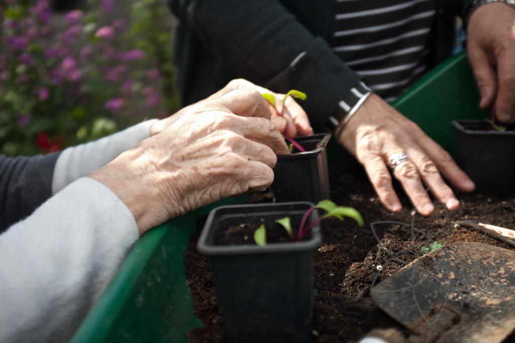 Dementia Friendly Gardening