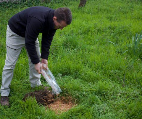 Brighton Permaculture Trust Mushroom Course